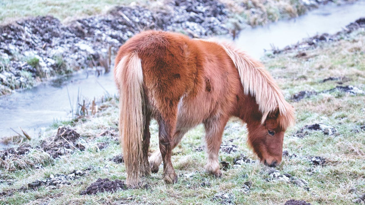 Six Mini Horse Injuries and How to Help Them