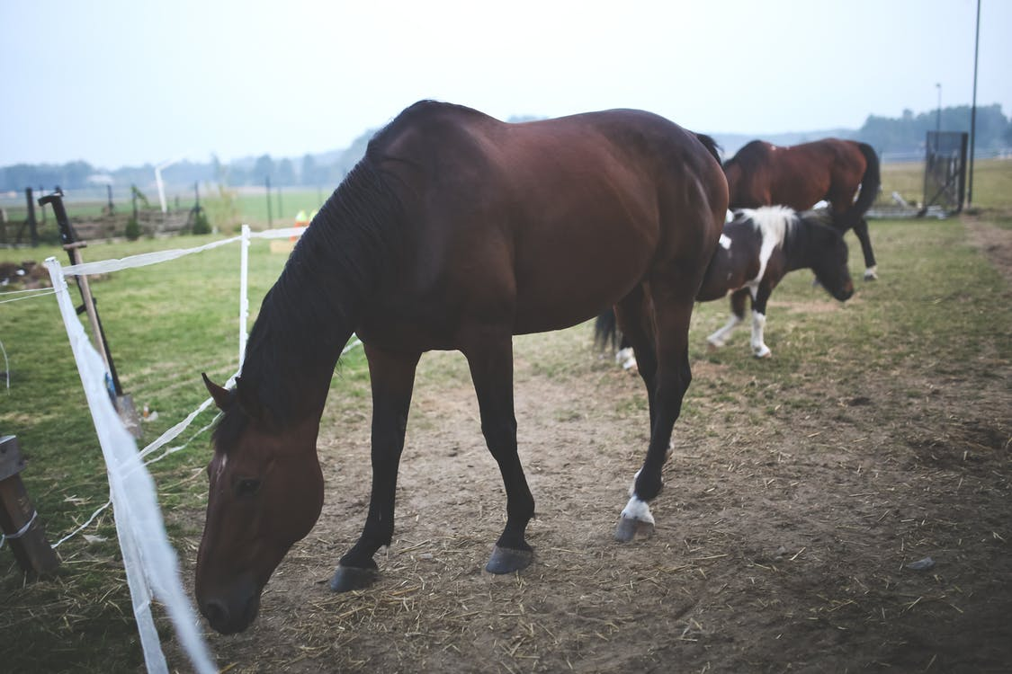 A dark brown horse with a black mane stands at the edge of their enclosure.