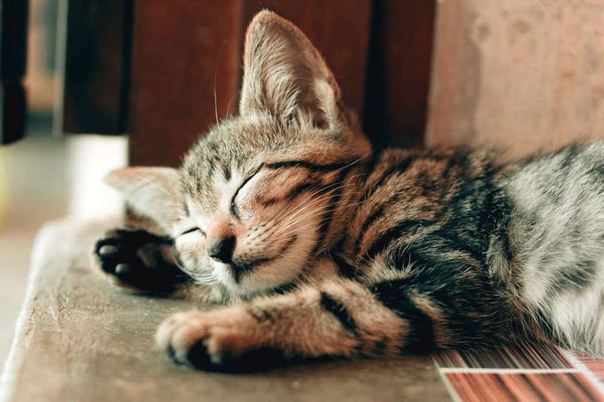 cat sleeping peacefully and comfortably after the causes of his dandruff problem have been addressed