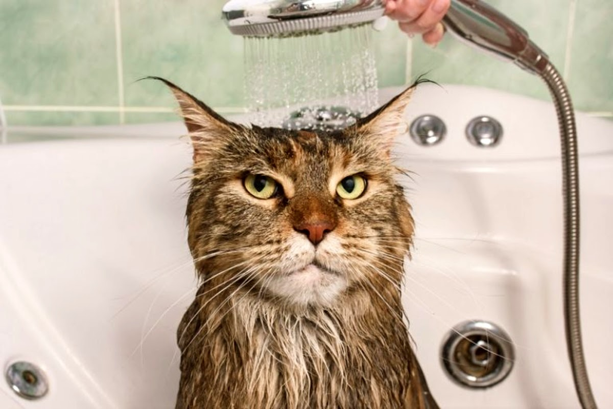 cat in a bath tub under the shower handle
