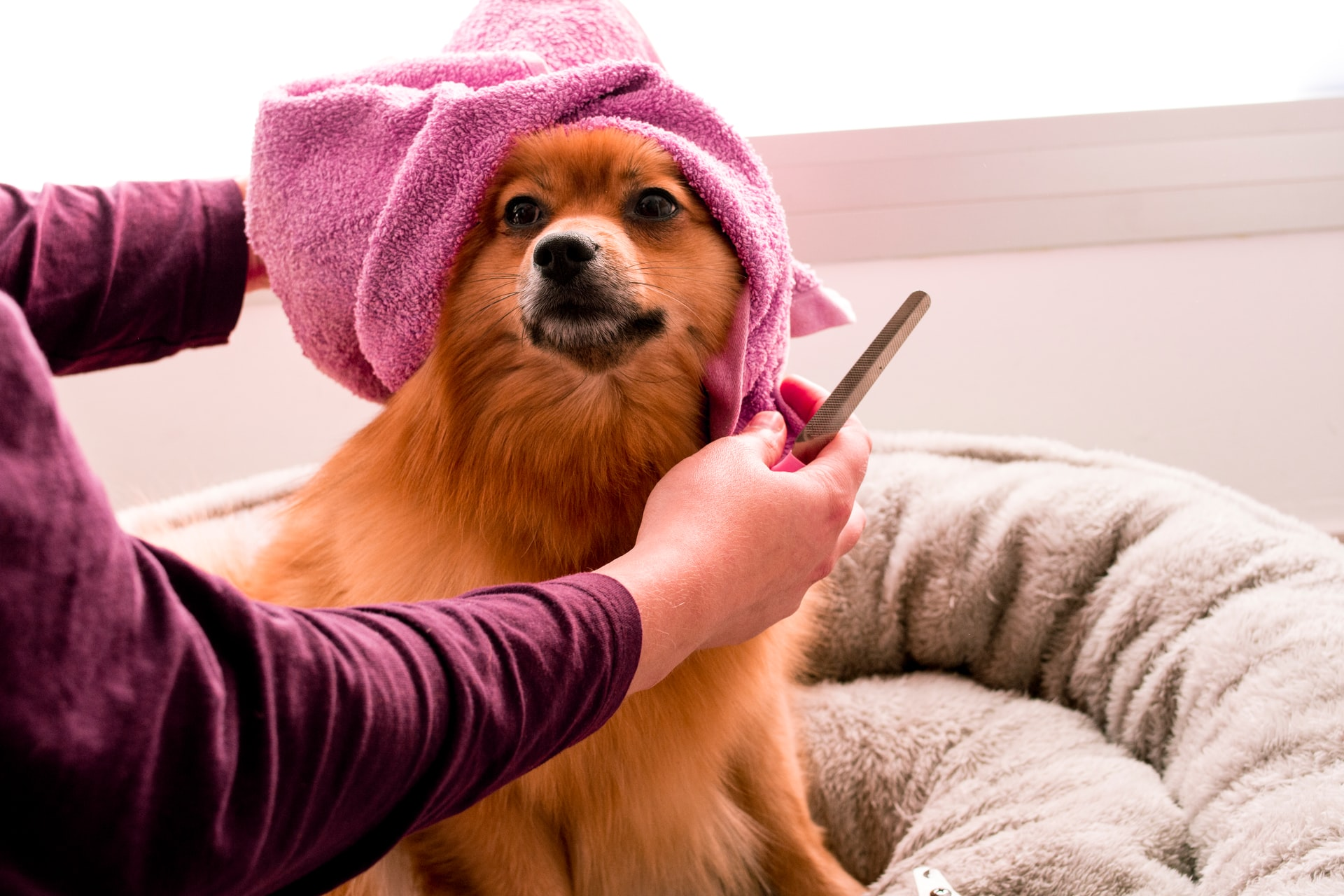 How to Bathe a Dog (Part 1): Preparing Your Dog for a Bath