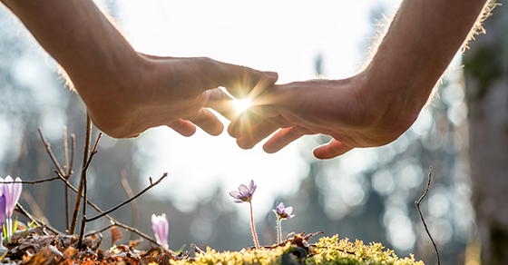 hands over new seedlings