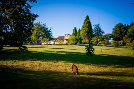 Voor de honden op hondencamping La-Soupèze in Frankrijk hebben we een groot speelveld!