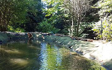 Zwemvijver voor de honden op hondencamping La-Soupèze in Frankrijk!