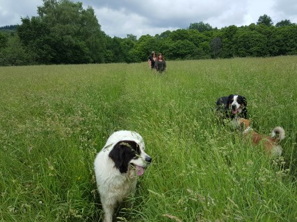 Heerlijk wandelen door de mooie omgeving van hondencamping La-Soupèze, vakantie met je hond in Frankrijk!