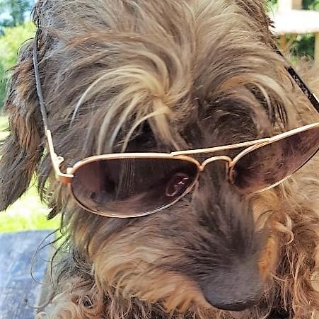 Djenna van hondencamping La-Soupèze, vakantie met je hond in Frankrijk!