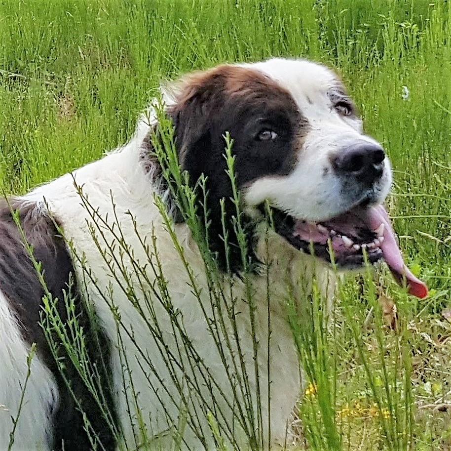 Hannes van hondencamping La-Soupèze, vakantie met je hond in Frankrijk!