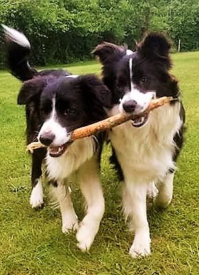 Vrolijke honden op vakantie op hondencamping La-Soupèze in Frankrijk!