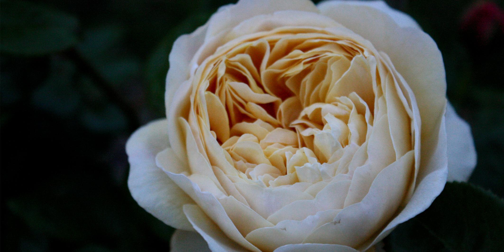 rose20142