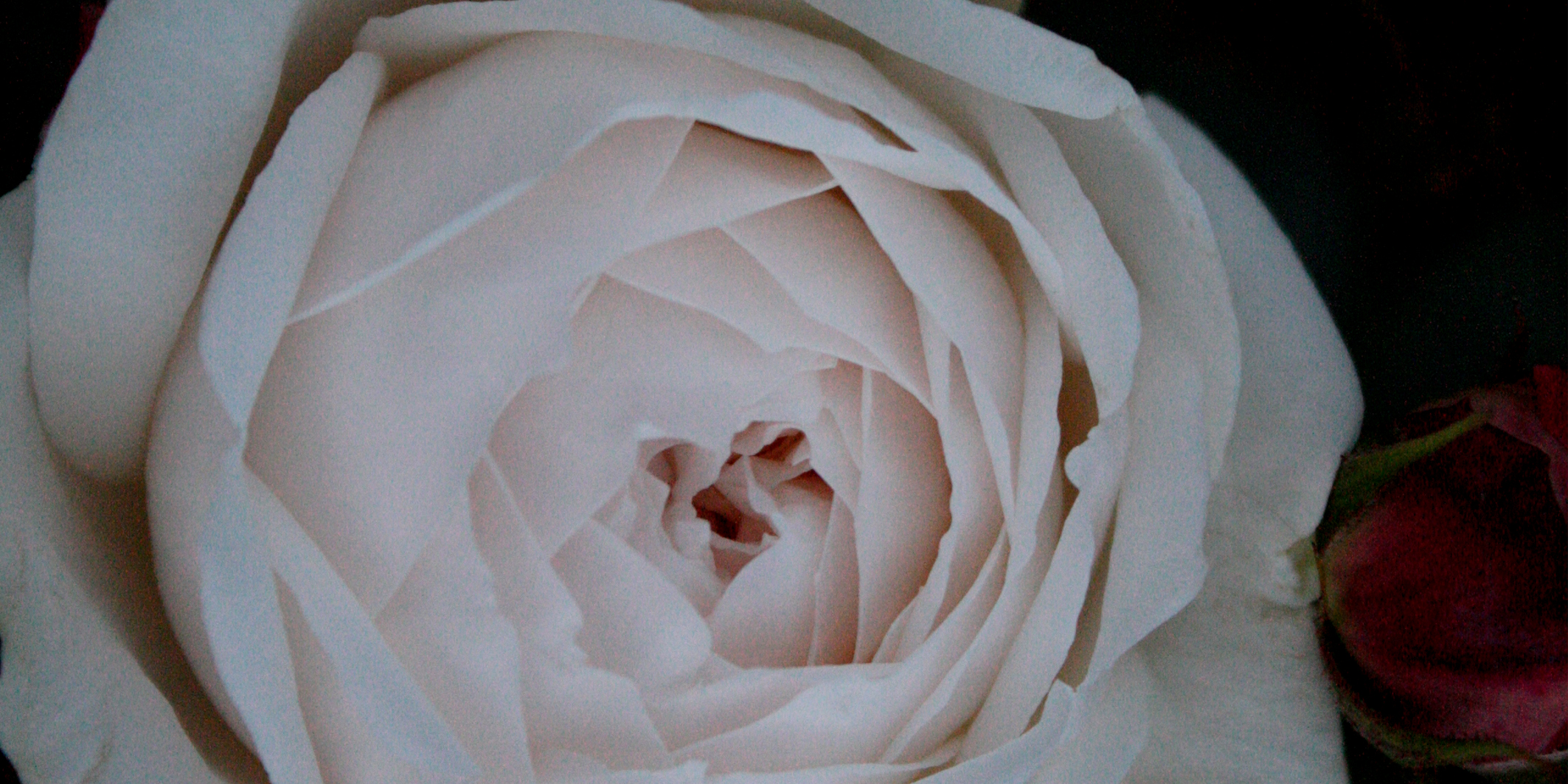 rose32014