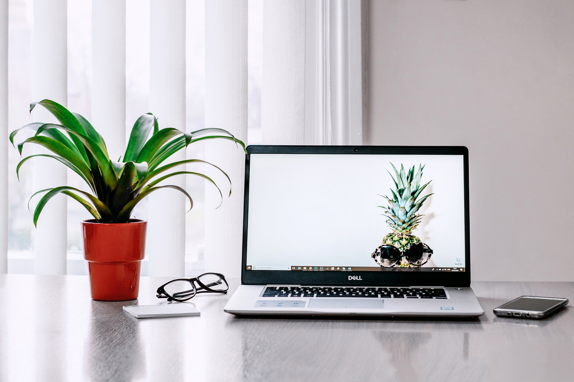 Office plants really help with positive workplace psychology