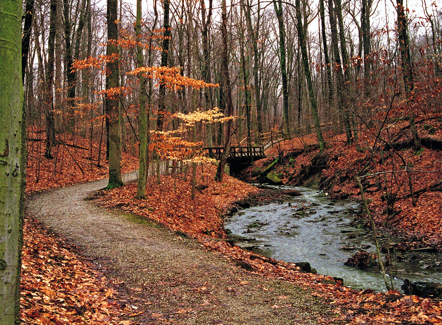beautiful fall trees with changingleaves at highbanks metro park in westerville ohio