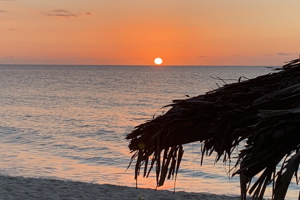 sun set on the beach with palm tree off to the side