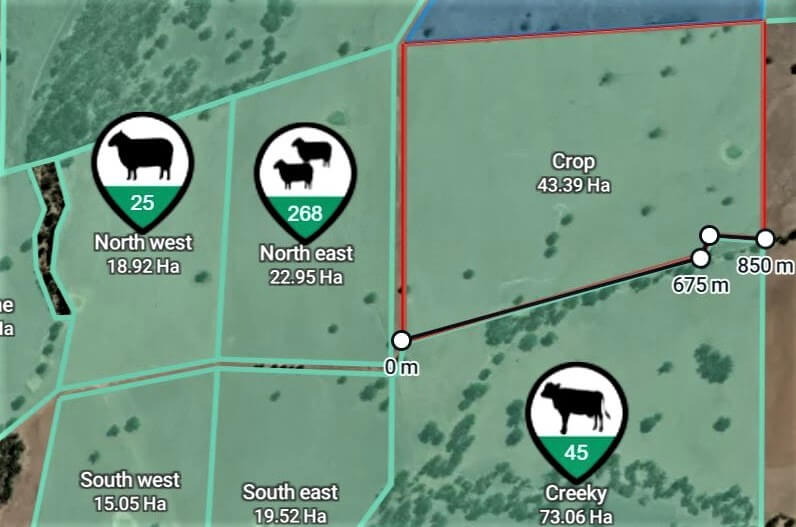 Cattle being managed by Farm App Mobble