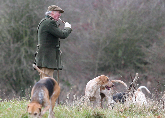 Beaufort Hounds on Foot
