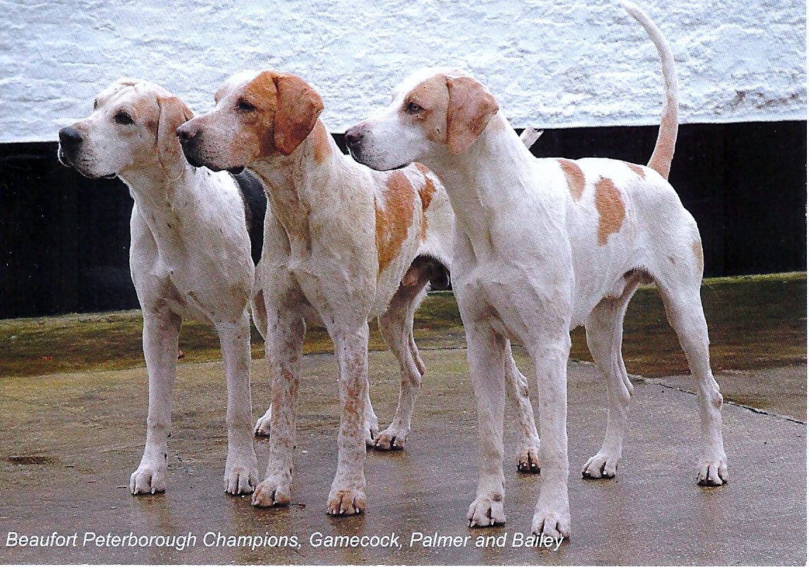 Beaufort Hunt -Three Champions