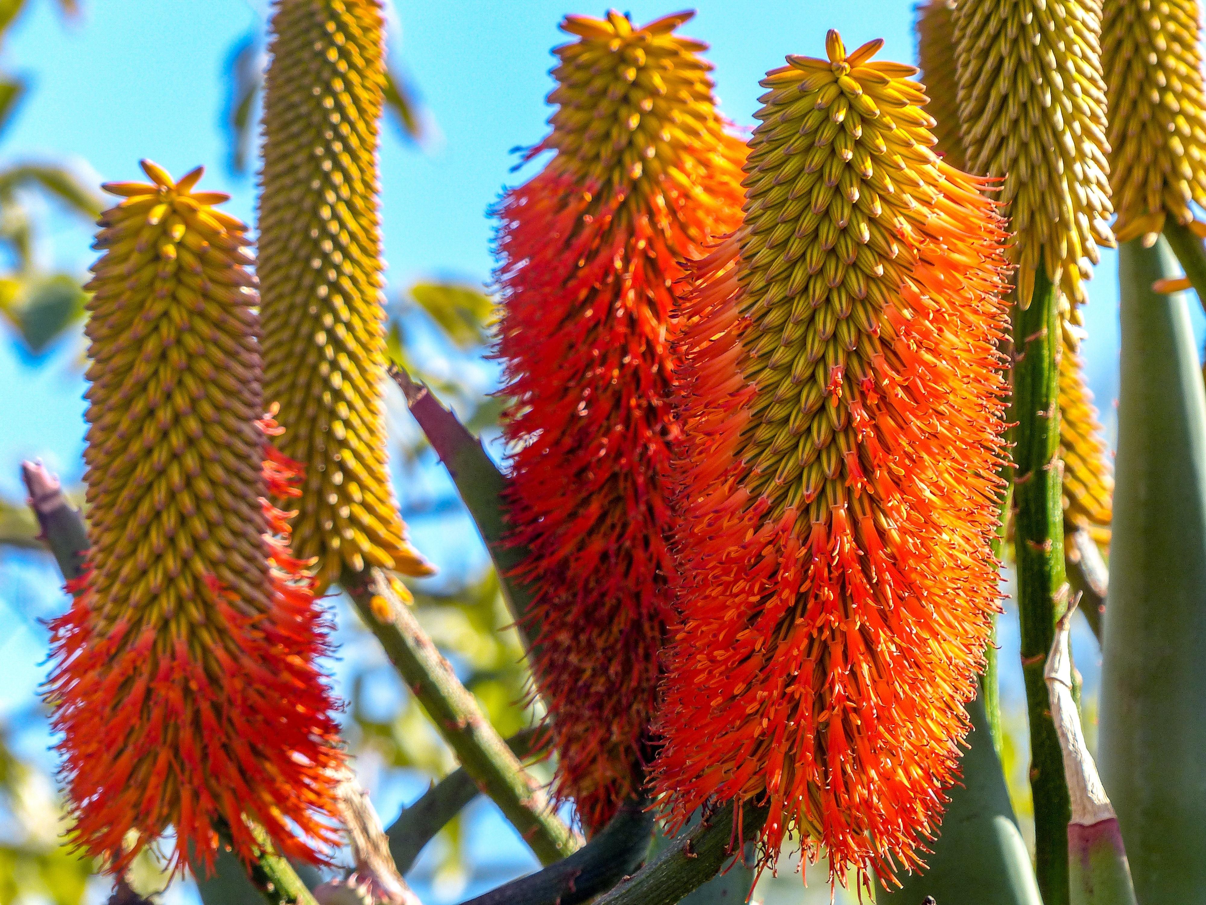 Aloes in Wonderland, rare plant nursery