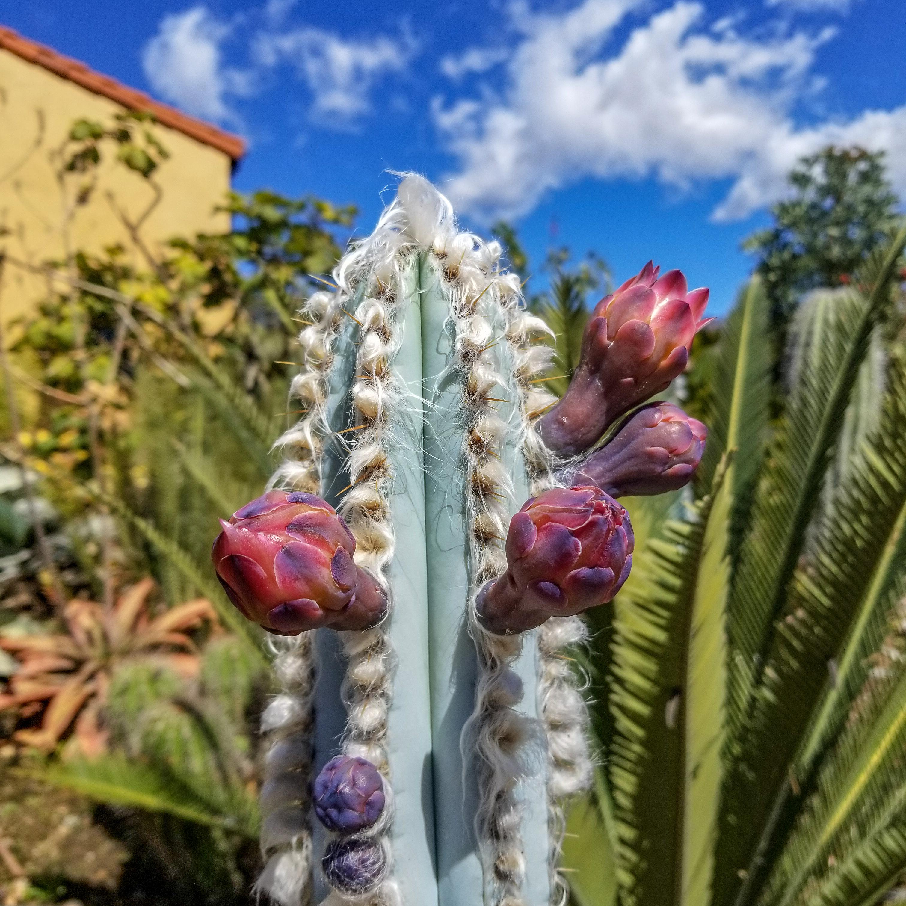 (Rescheduled) Cactus Bloom Tour