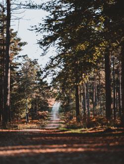 melrose woods