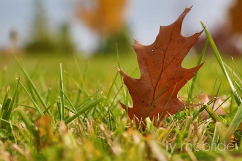 Leaf Standing Still - Bowmanville, Ontario