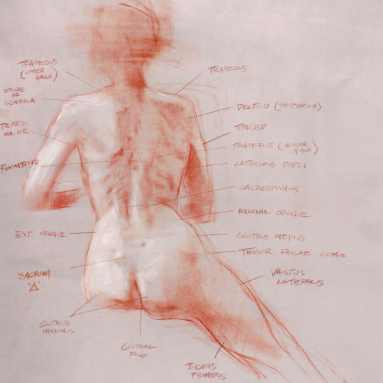 Anatomy figure drawing class Vancouver