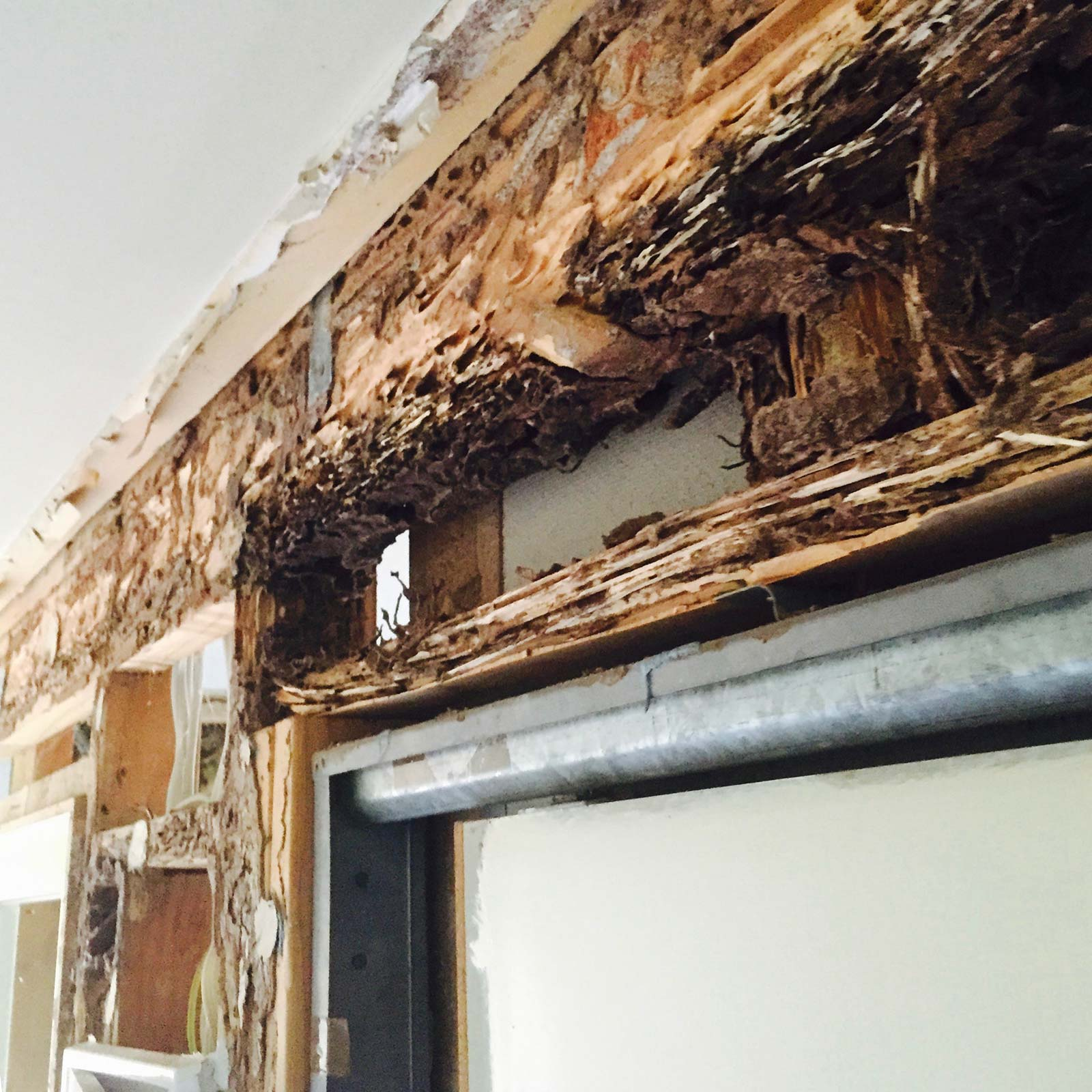 Termite damage to homes