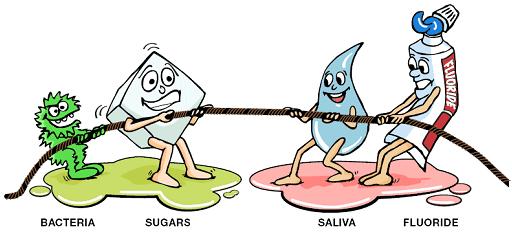 Tug of War Between Bacteria and Sugars Versus Saliva and Fluoride