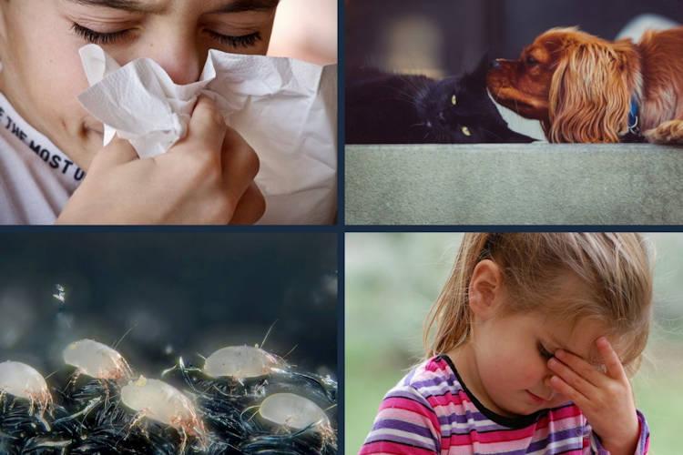 Allergien lindern air-Q