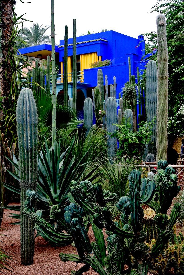 Majorelle garden in Marrakech, Morocco