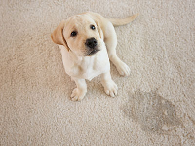 We clean up pet stains