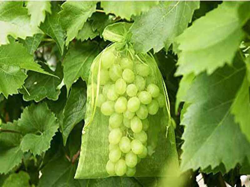 Obst Schutzbeutel Botra Xtra