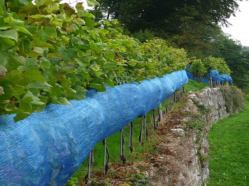 Seitenschutznetz Vinea