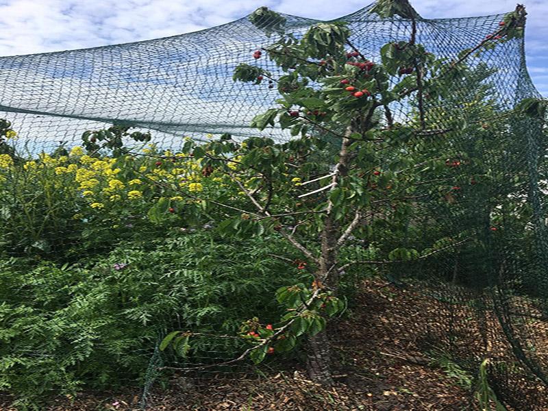 Robusta Gartennetz
