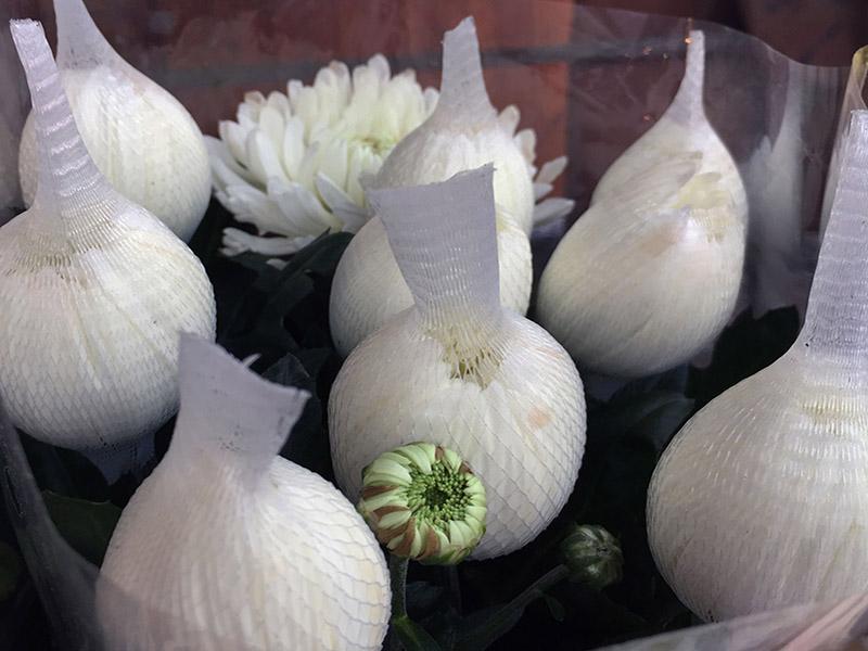 Flowerprotecta Blumenknospeschutz