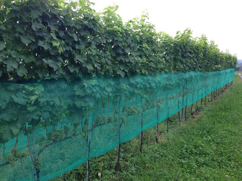 Vaspa Waspenschutznetz