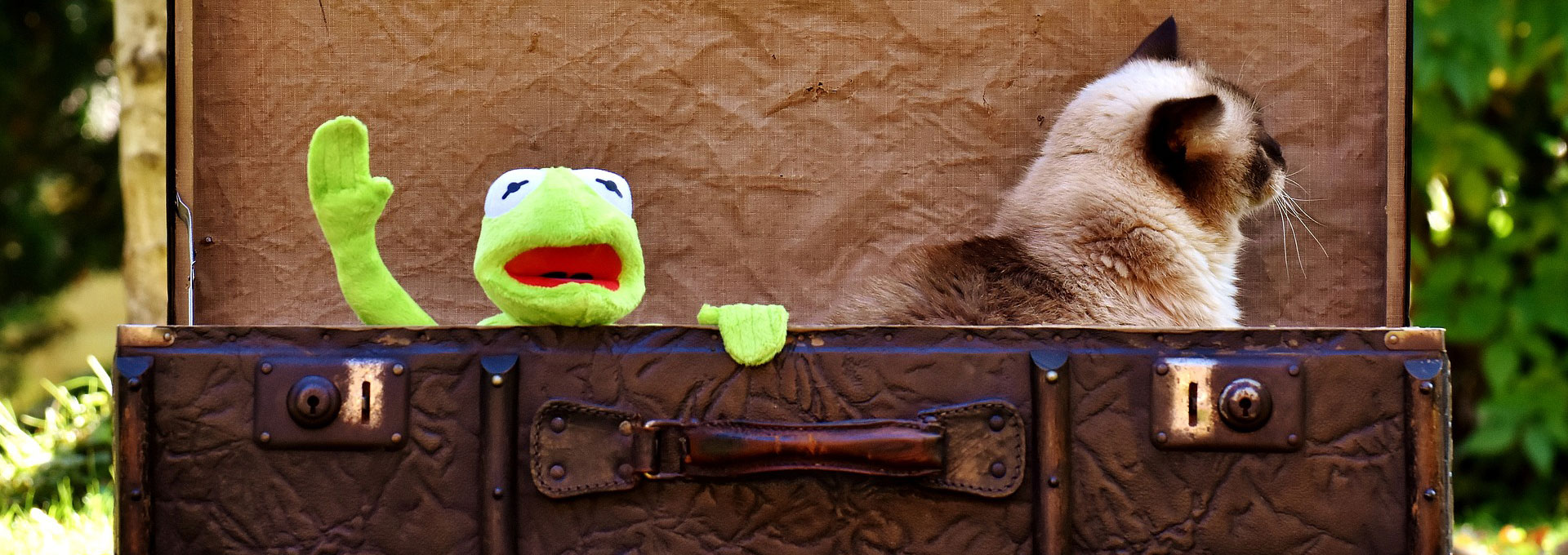 kermit and himalayan cat in suitcase