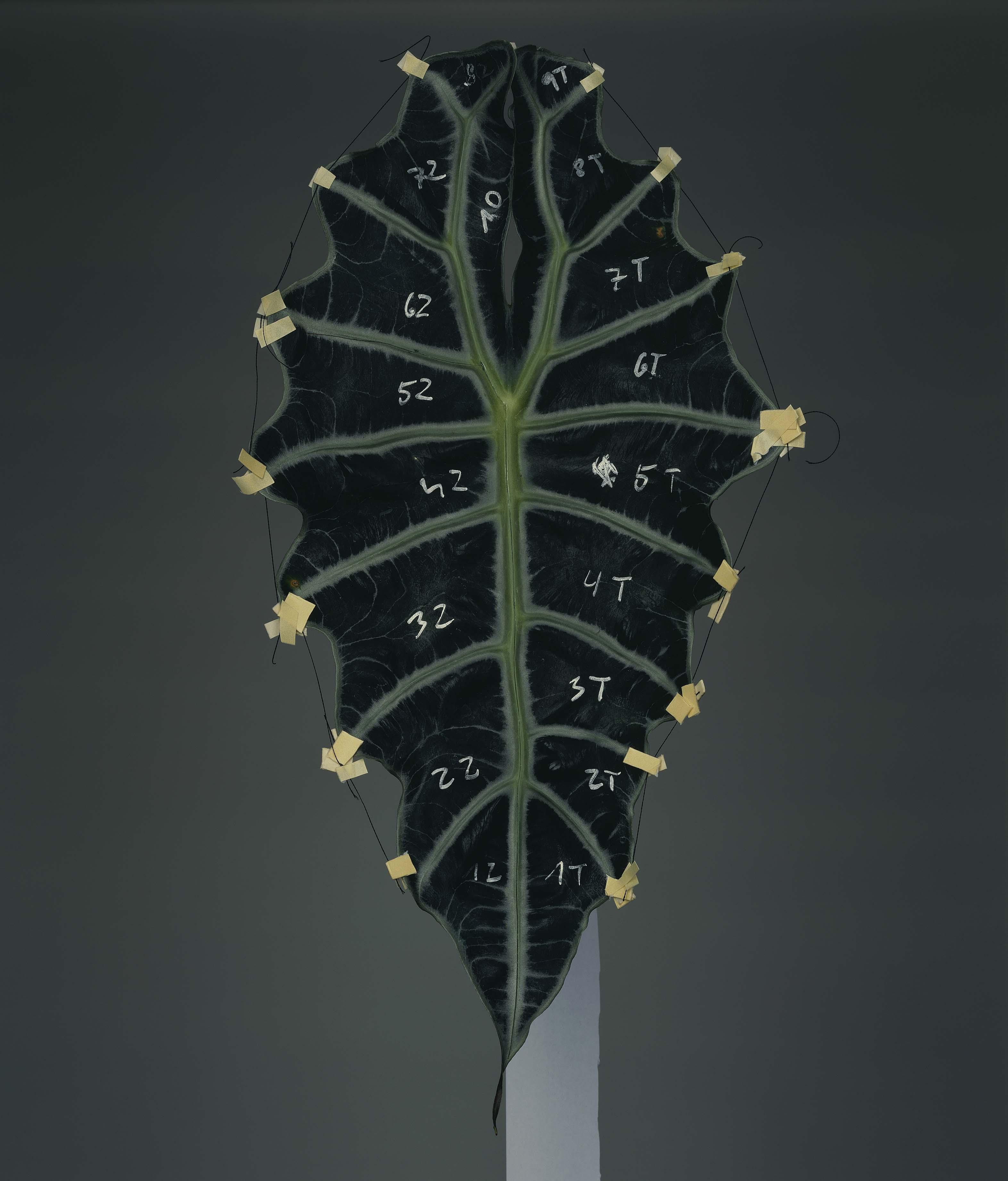 Szétszerelés #9, 2012 © Bownik / A művész és a Ravestijn Gallery jóvoltából