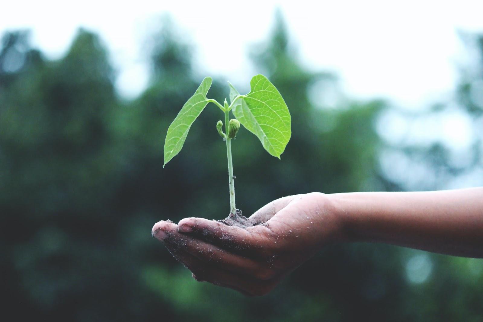 CSR for startups