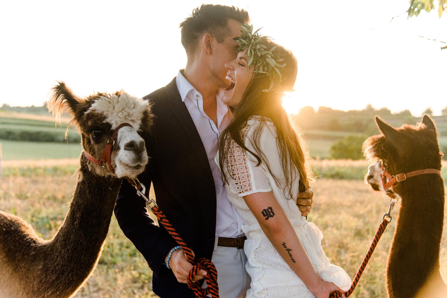 Verliebtes Paar mit Alpakas