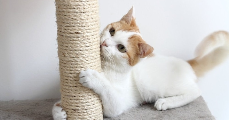 best cat scratching posts