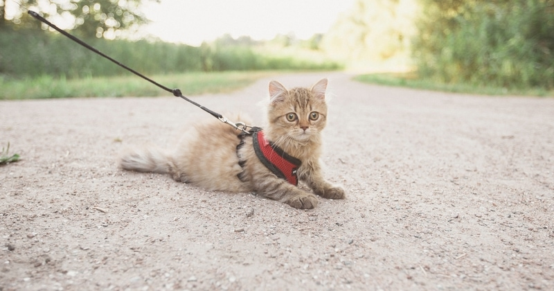 best cat harness