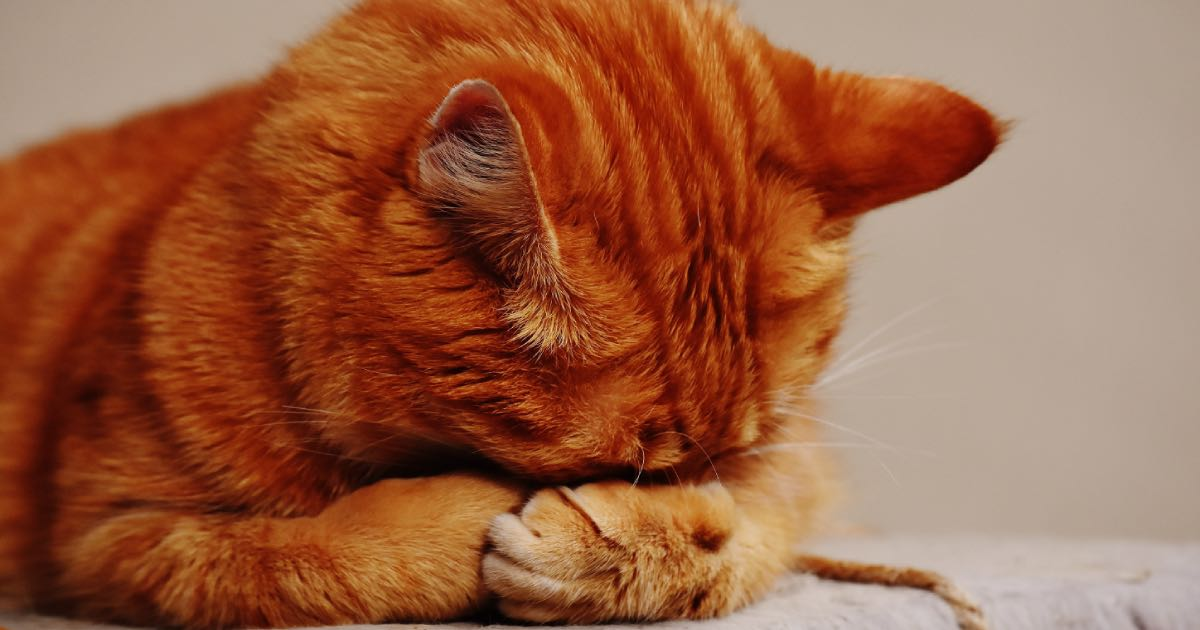 Best Cat Food for Sensitive Digestion