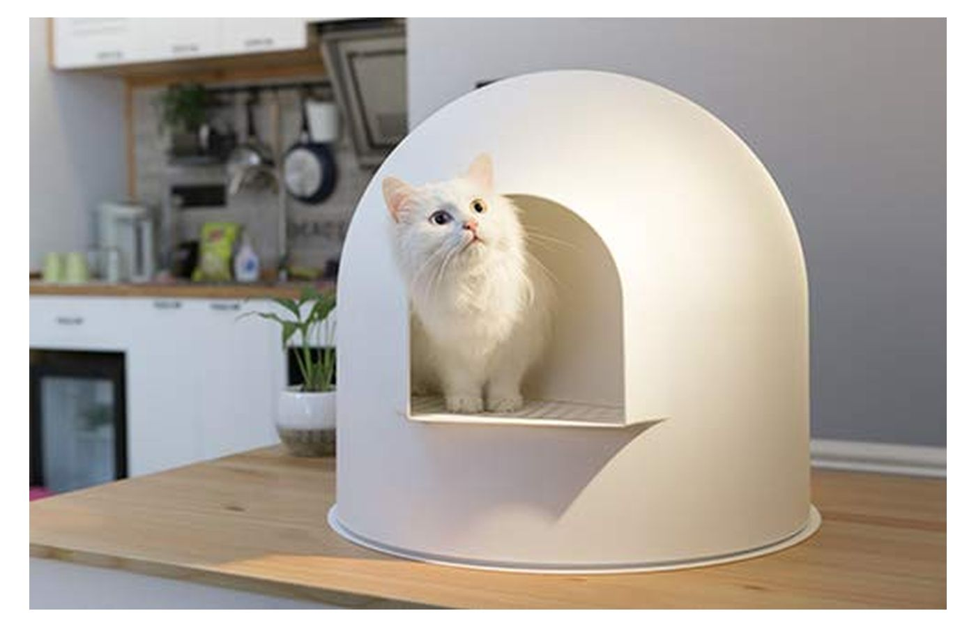 Pidian Igloo Cat Litter Enclosure