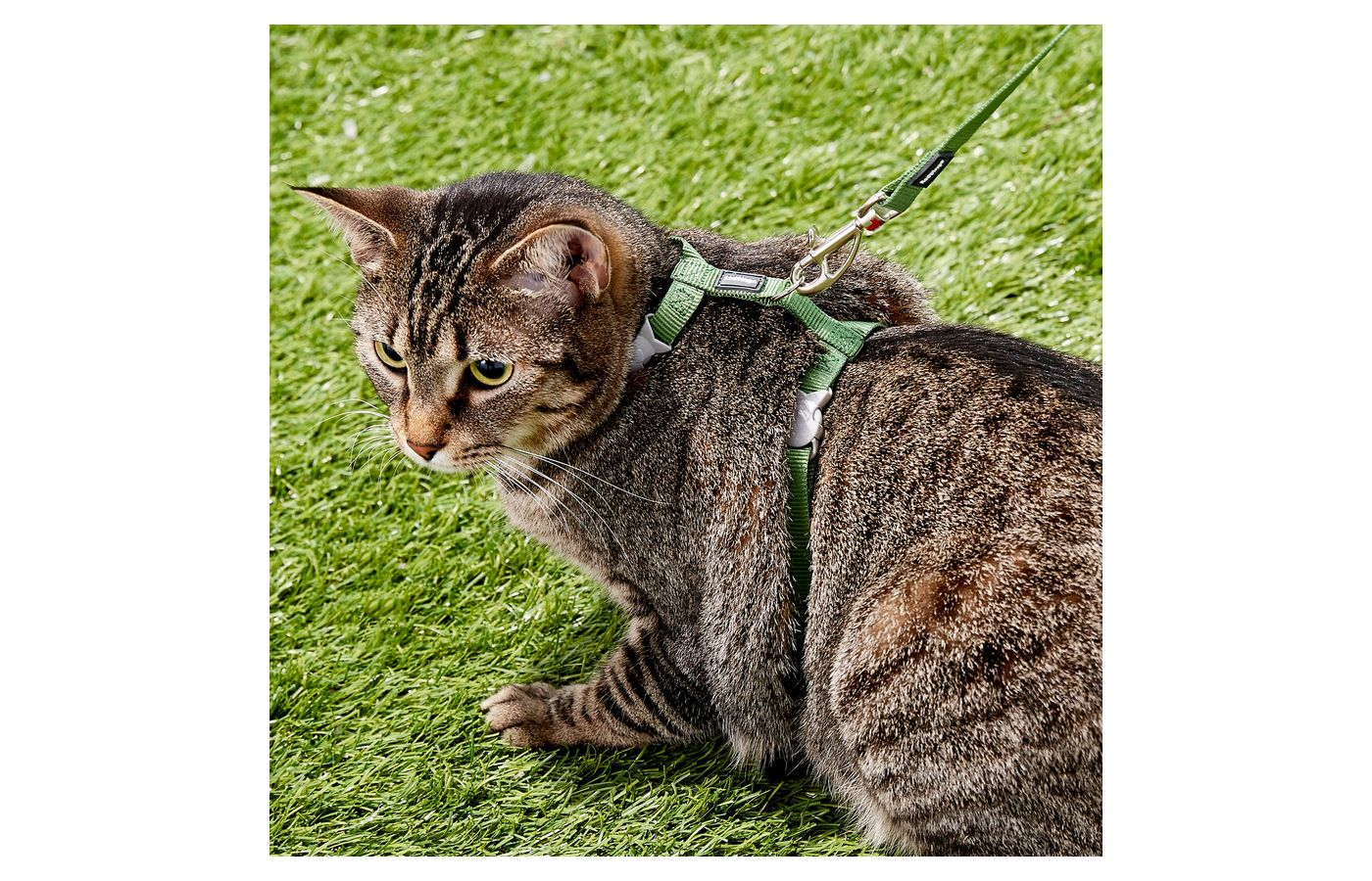 Red Dingo Classic Cat Harness and Lead combo