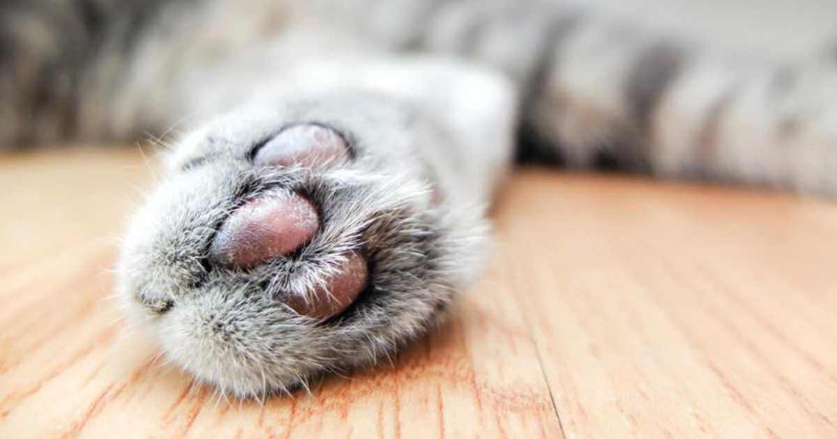 Best Cat Litter for Declawed Cats