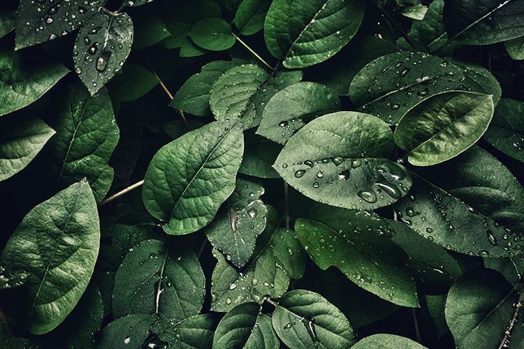 Pflanzen auf Ungeziefer untersuchen
