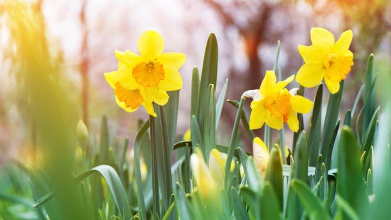 Im März gibt es viel zu tun im Garten: Pflanzen anpflanzen oder schneiden und düngen, Sträucher schneiden und Rasen mähen.