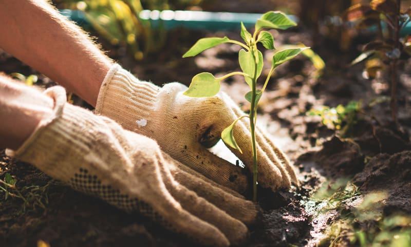 Baumpflege: Neuer Baum im Garten pflanzen