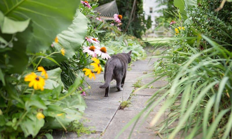 Nachbarrecht:Katze streift durch einen Garten