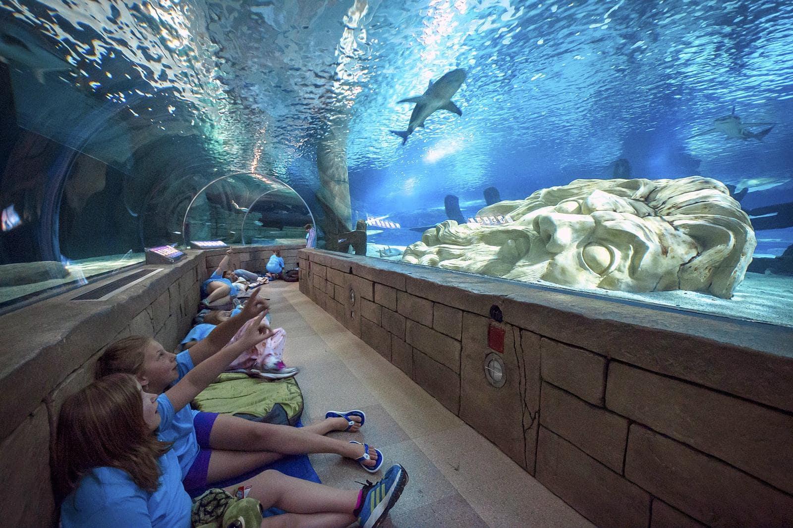 school group sitting in tunnel at aquarium